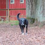 Dog Park Review – Hazelia Field Dog Park