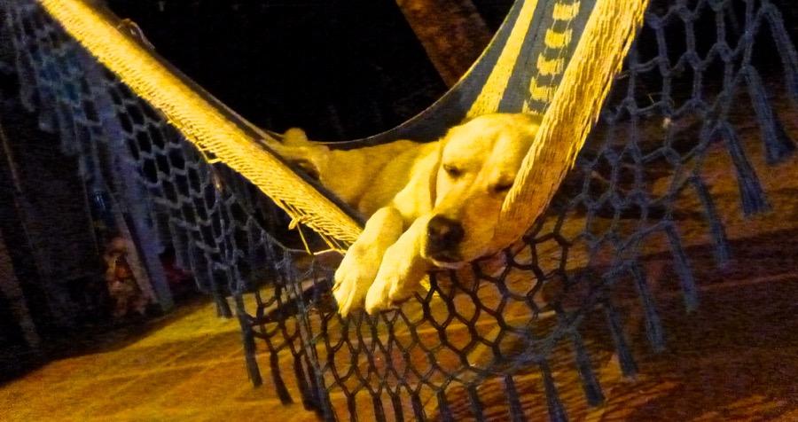 x karma hammock